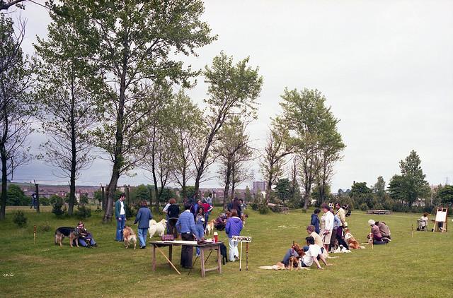 Dundee dog show