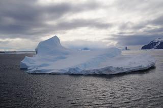 779 Antarctic Sound met aalscholvers
