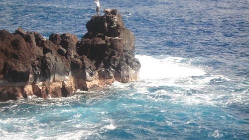 Flickriver big island fishing pool for Fishing big island hawaii