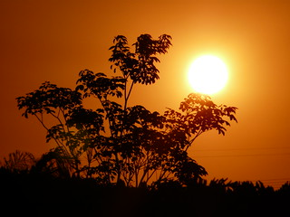 ---Golden Smokey Sunset---