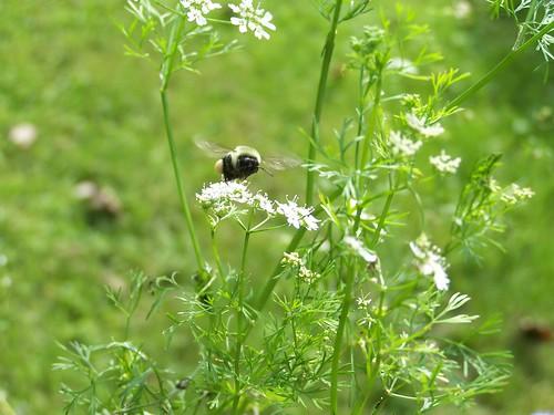 bee landing on flowers