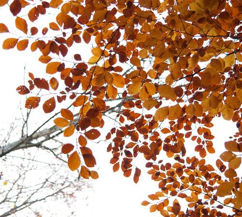 red orange tree yellow forest catchycolors leaf skåne sweden torup bokskogen canonefs1785mmf456isusm