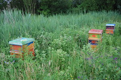 woodland, prairie, agriculture, flower, grass, green, natural environment, meadow, apiary, beehive,