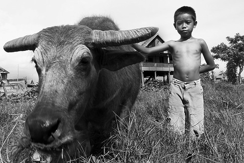 travel boy shirtless portrait white black animal indonesia photography cow kid interesting buffalo bath south stupid sulawesi stubborn makassar earthasia tedong