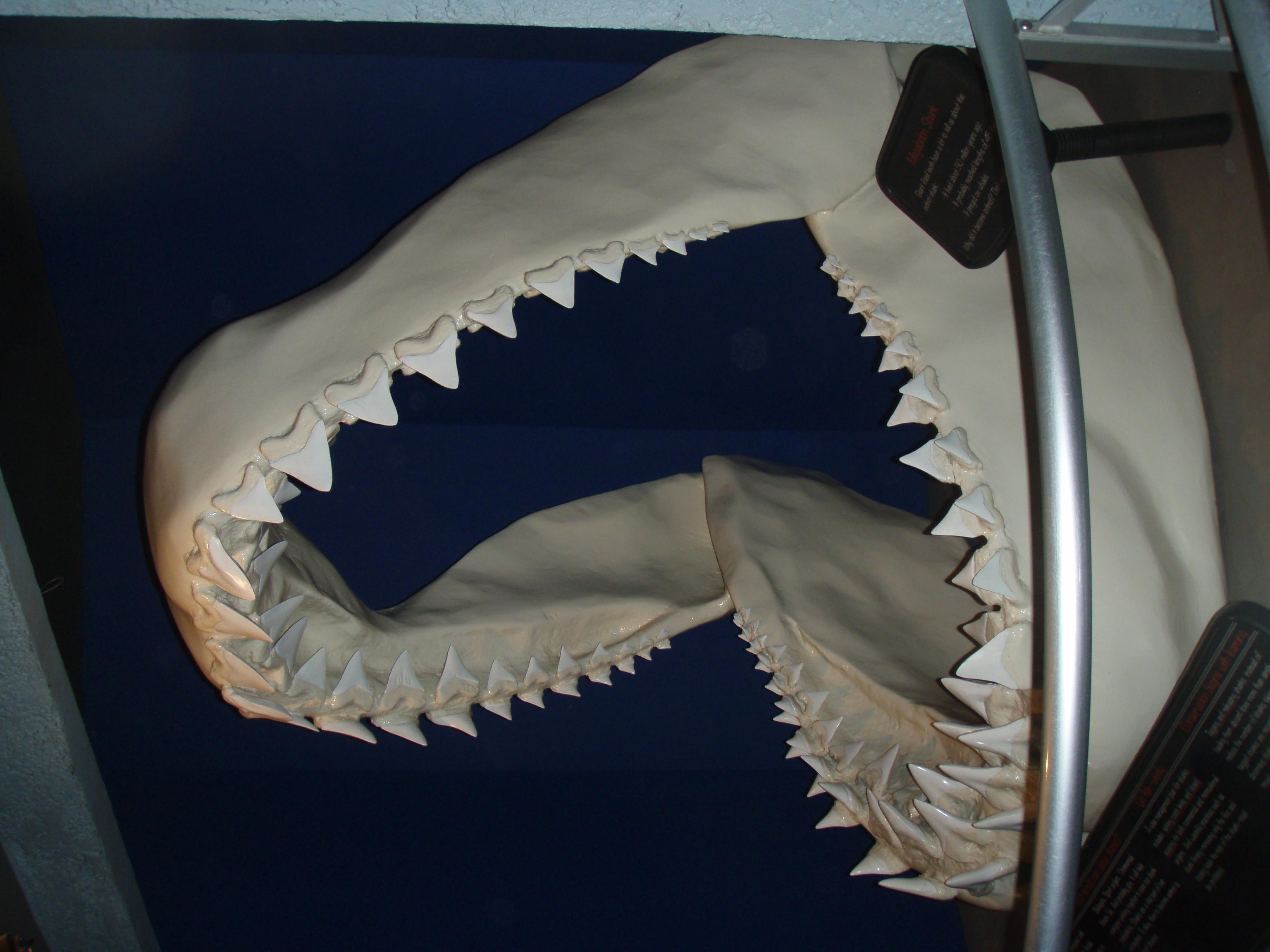 pin de megalodon vs predator x remade en youtube on pinterest