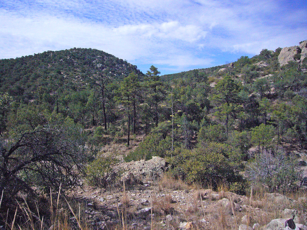 Whitmire canyon wilderness study area