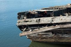 Homebush Rotting Dock