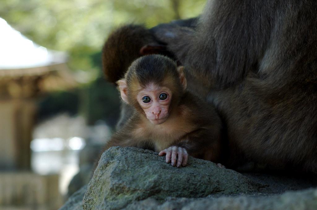 monkey #23