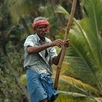 Rowing Along the Water - Kerela Backwaters, India