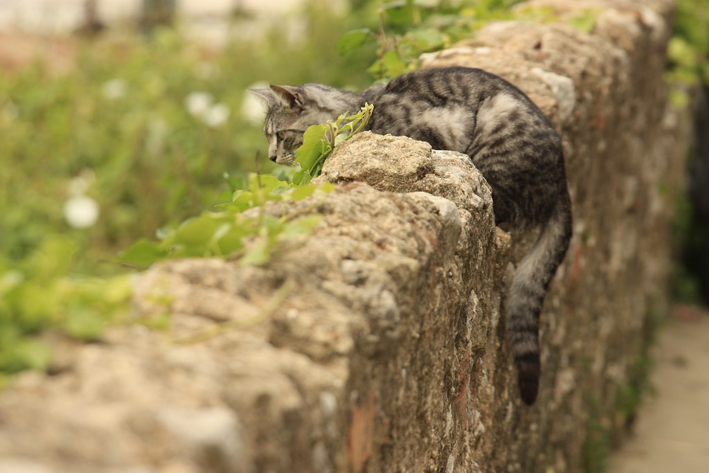 Cat on a stonewall