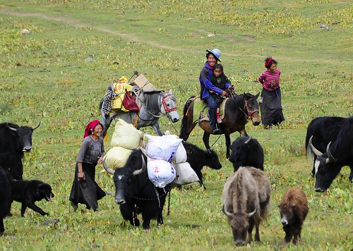A nomadic family on the move, Tibet
