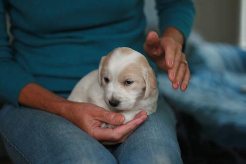 Julia & Puppy