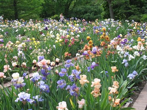 Goodman Iris Garden