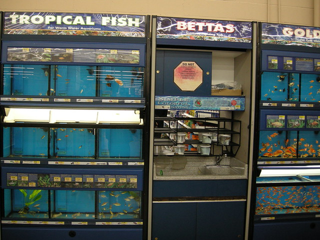 walmart fish for sale flickr photo sharing
