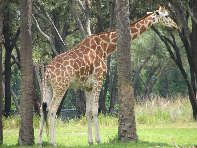 Sanaa Giraffe