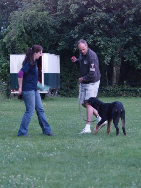 Custom Dog Training Metamora Mi