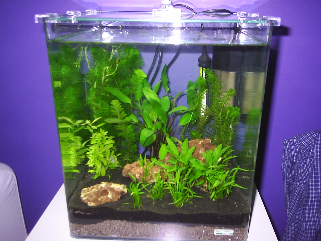 First tank dennerle nano cube 30l page 2 new to for Aquarium nano cube