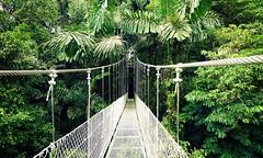 garden(0.0), woodland(1.0), rainforest(1.0), suspension bridge(1.0), canopy walkway(1.0), rope bridge(1.0), jungle(1.0), bridge(1.0),