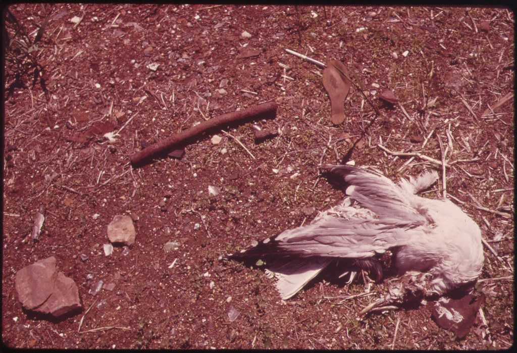 Dead Gull near Entrance to Great Kills Park on Staten Island 05/1973
