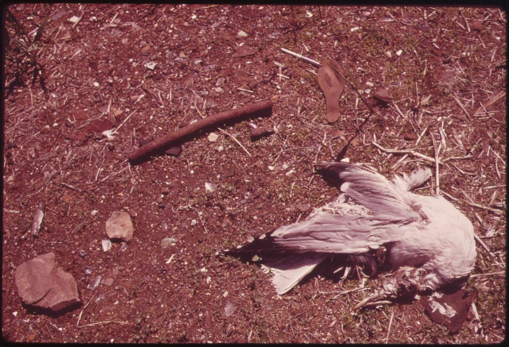 Dead Gull near Entrance to Great Kills Park on Staten Island 05/1973