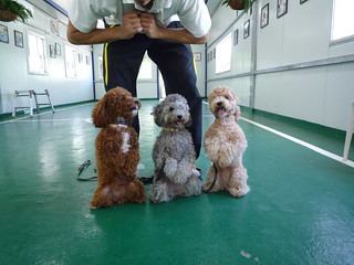 dog training,dog trainer,dog trainer daniel