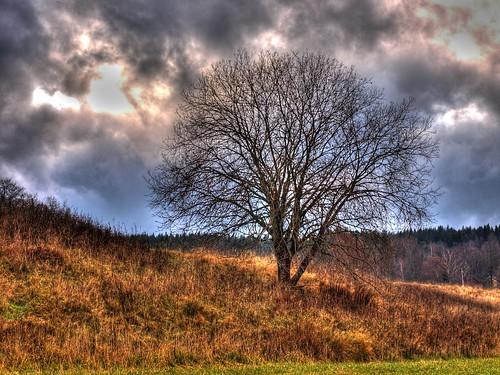 tree olympus hdr träd photomatix e520 olympuse520 100commentgroup kinnahult harpebo peternyhlén