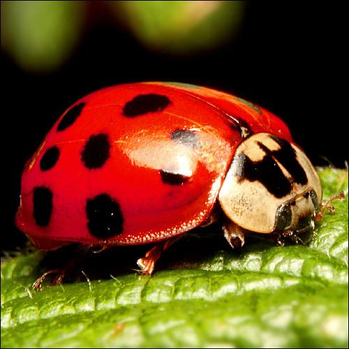 Ladybug Ladybird, ViaMoi, CC-BY-NC-ND