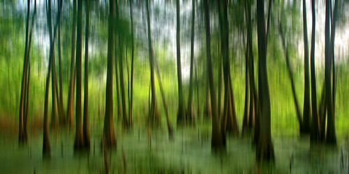 morning trees lake abstract blur water sunrise canon rebel la blurry louisiana lafayette ben south birding alligator southern swamp boardwalk pierce cypress algae preserve egret wetland tupelo natureconservancy lakemartin stmartinville breauxbridge xti cypressislandpreserve photocontesttnc09