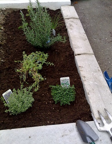 Photo Of A Small Herb Garden - BlogAppeal.com