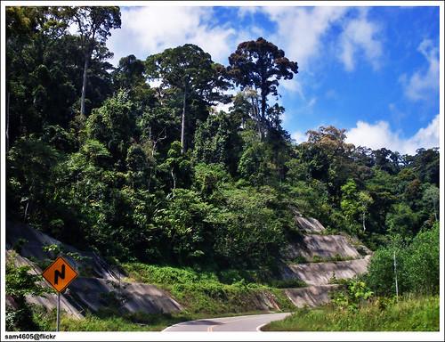 Jalan Tenom-Sipitang, Hutan Simpan banjaran Crocker