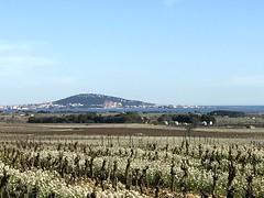 Bridau Pinet 22 février 2017 - Photo of Cazouls-d'Hérault