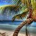 Twisty Palm Tree by white_shadow_photog