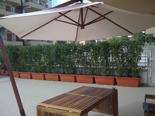 Siepe di alloro in vaso forum di - Siepe in vaso terrazzo ...