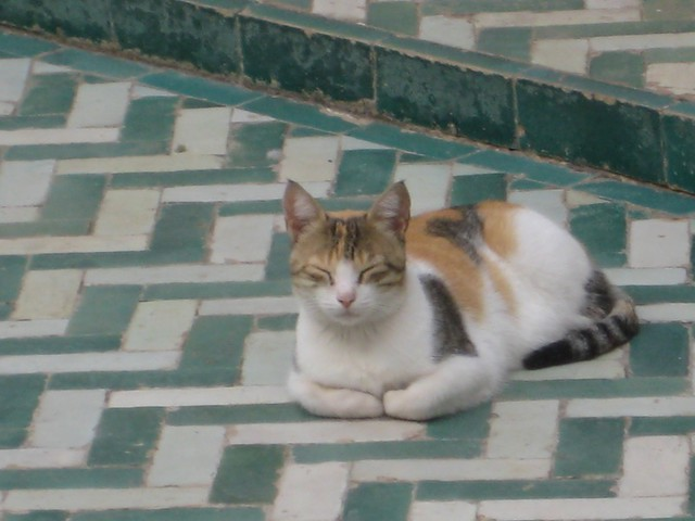 Bahia Palace Cat, Marrakesh