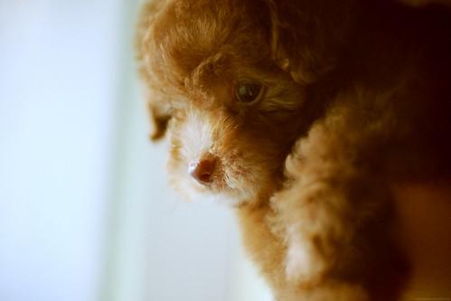 puppy - 無料写真検索fotoq