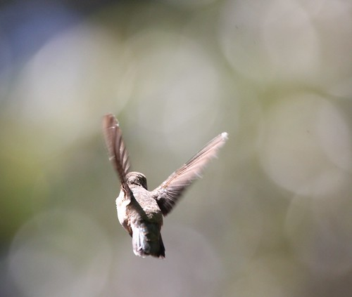 Fly into the bokeh by San Diego Shooter, on Flickr