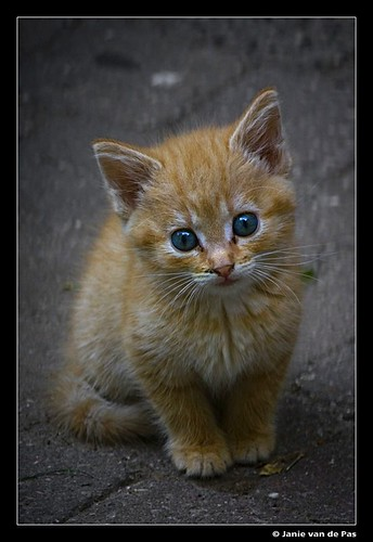 Just a cute cat....
