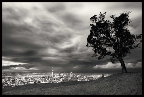 city newzealand blackandwhite bw tree rain night canon dark moody angle wideangle auckland nz darkclouds 30d copyrighted caon30d pleasedonotusewithoutmypermission maloe4 maloephoto maloephotography markemirali