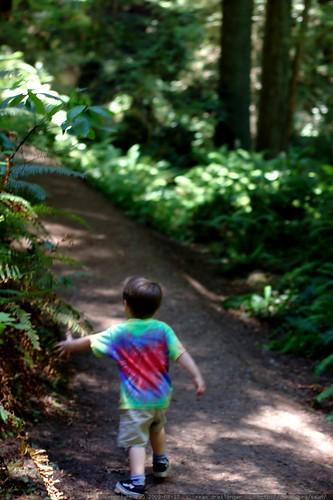 walking in the humboldt redwoods    MG 1061