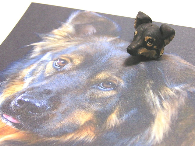 German shepherd chow mix dog bead flickr photo sharing