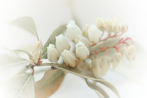 Freelensing, soft and delicate...