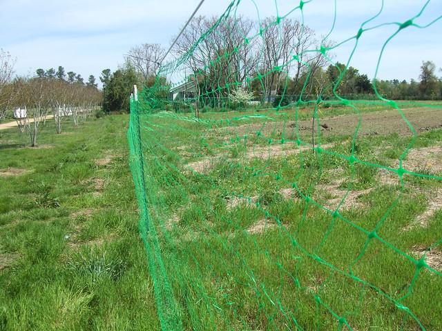 Plastic Mesh Deer Fence : JinKe Plastic Netting Factory