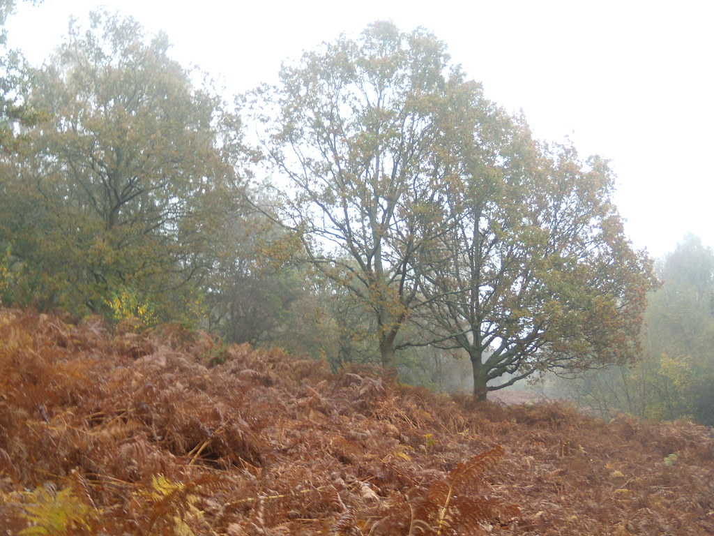 Trees and bracken Witley to Haslemere