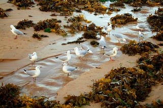 Imagen de Dee Why Beach cerca de Dee Why. bird beach water animal landscapes wildlife seagull sydney australia places things equipment newsouthwales deewhy deewhybeach canonefs1855mmf3556 canoneos400d
