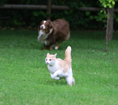 Cat Herding image CC-BY courtesy of carterse on Flickr; click to view original