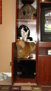 Four-cat stack