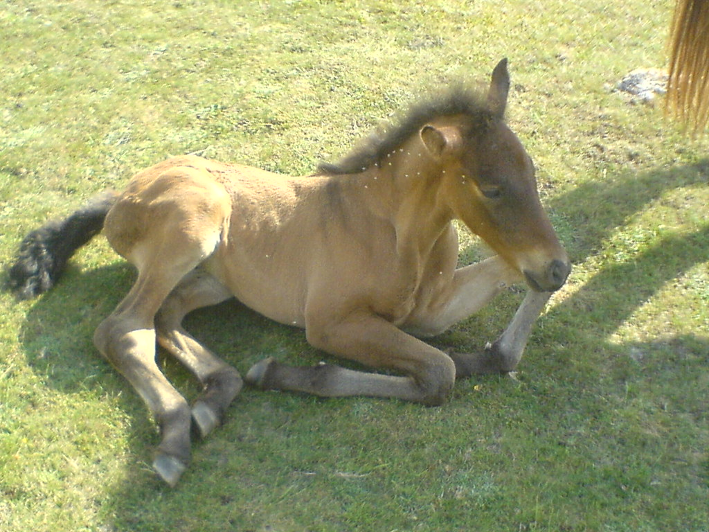 BABY HORSE BEING BORN - BEING BORN - AUSTRALIAN BABY NAMES