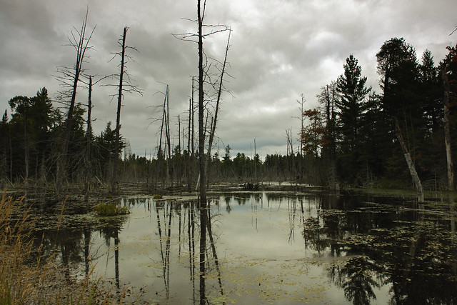 A beaver lake in Algonquin Provincial Park