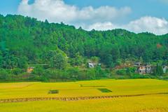 Guizhou field