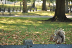 Squirrel - Battery Park - New York